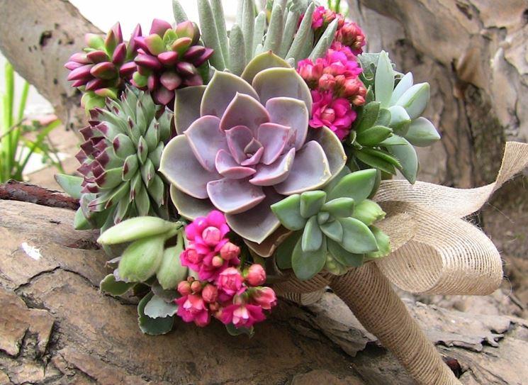 Piante grasse da appartamento piante grasse come for Piante e fiori da appartamento