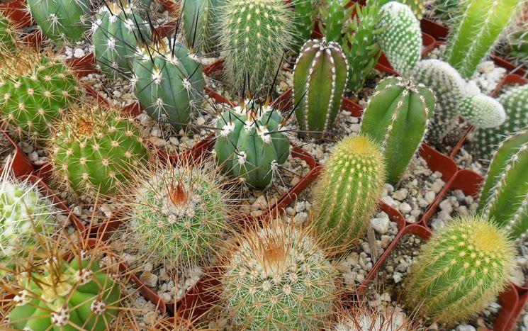 Coltivazione piante grasse casa