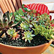 composizione piante grasse