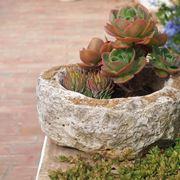 Composizione succulente