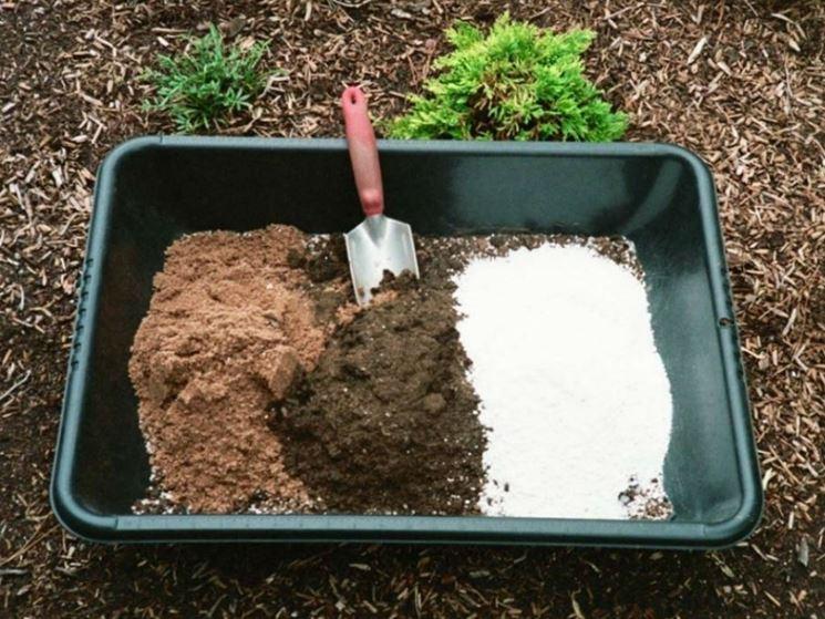 Terreno piante grasse