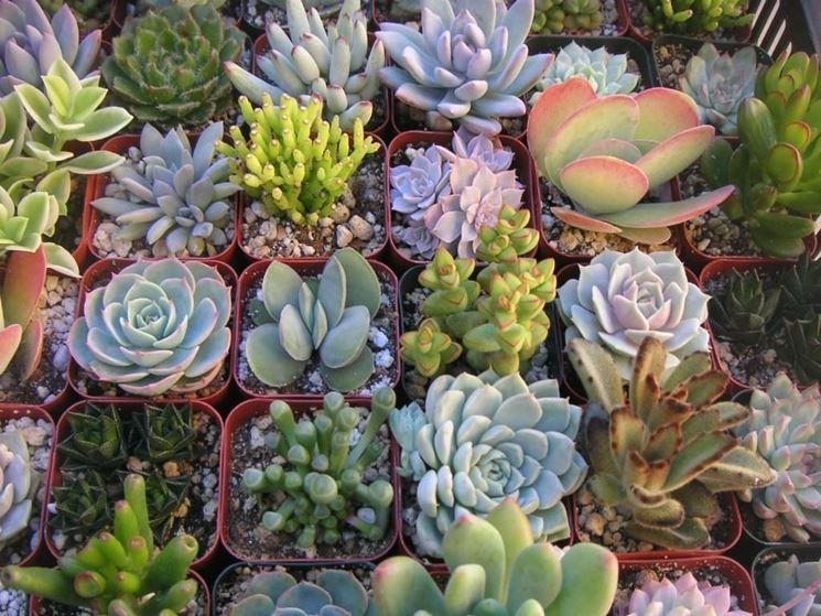 Varietà piante