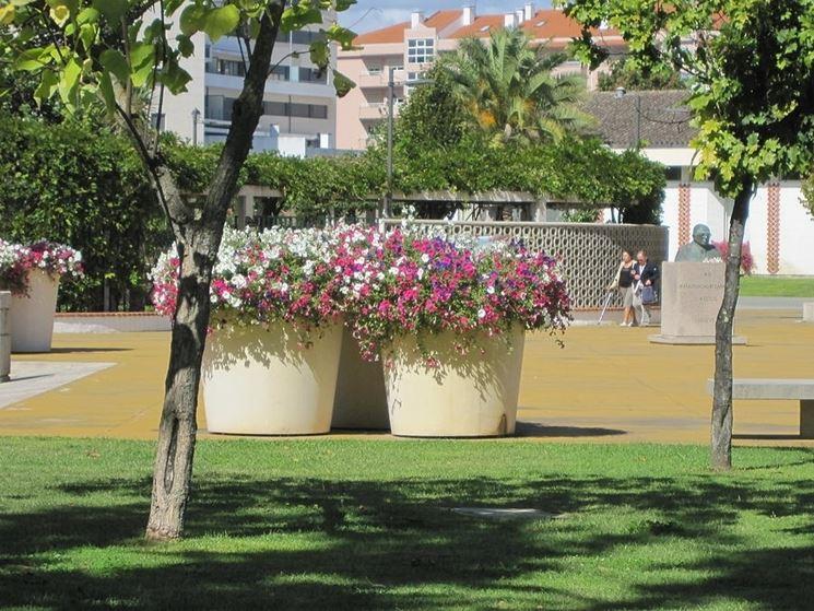 Giardino fioriera