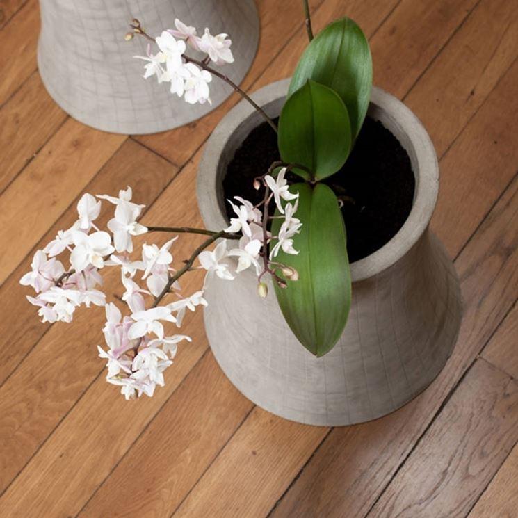 I vasi per fiori vasi da giardino modelli vasi for Vasi per bonsai prezzi