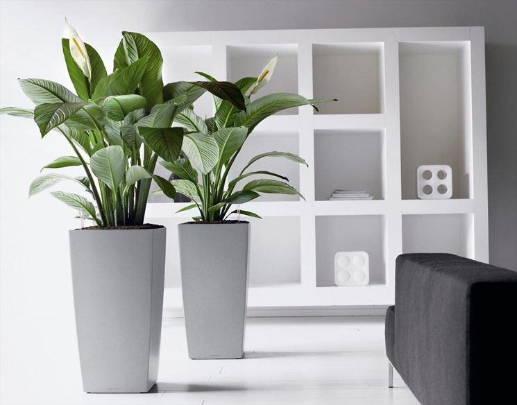 Modelli di vasi da interno vasi da giardino scegliere for Vasi moderni da terra