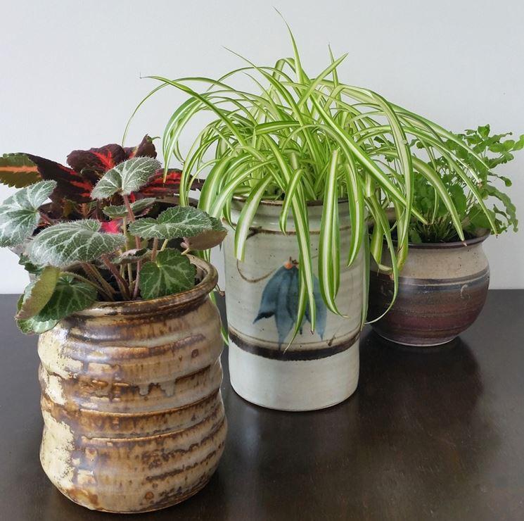 Vasi da interno vasi da giardino vasi per ambienti interni for Vasi grandi per interni