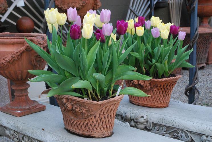 Vasi fiori decorati