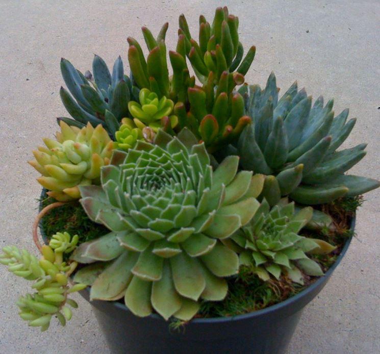 Vaso plastica piante grasse