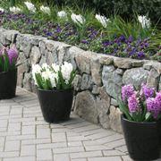 Vasi per piante da esterno