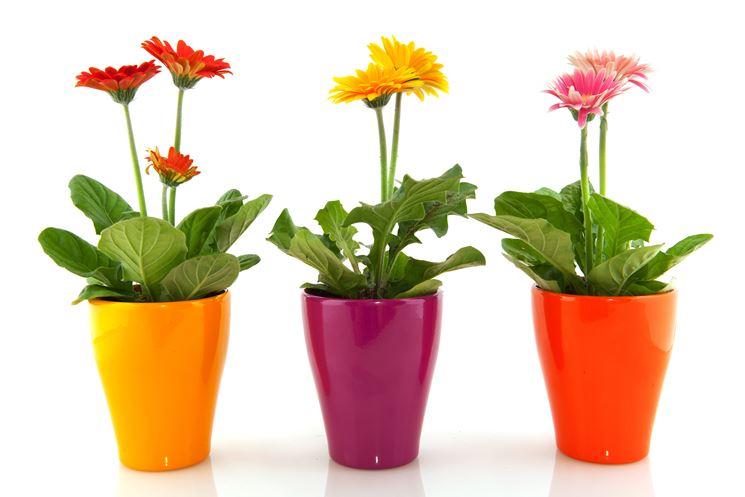 Moderni vasi per piante