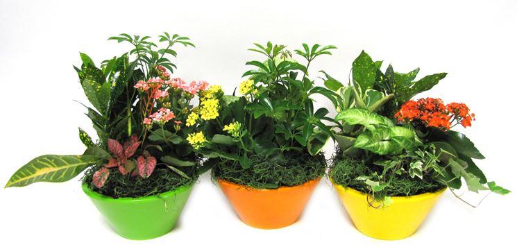 Vasi per piante vasi da giardino tipologie di vasi per - Vasi piante design ...