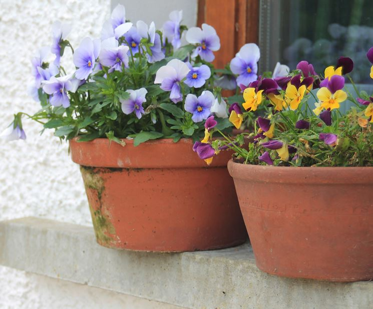 vasi da giardino in terracotta