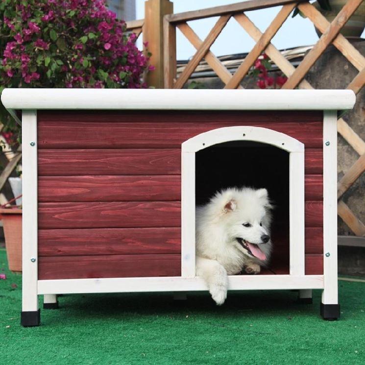 Casetta cani
