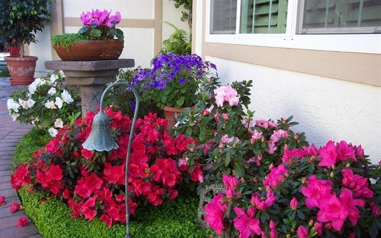 Ciclamini nei vasi del giardino