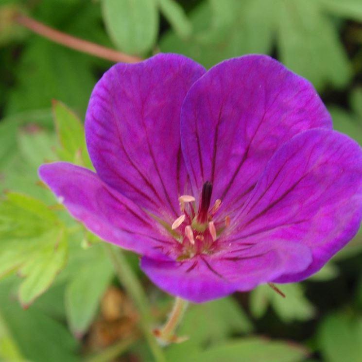 Primo piano di un fiore