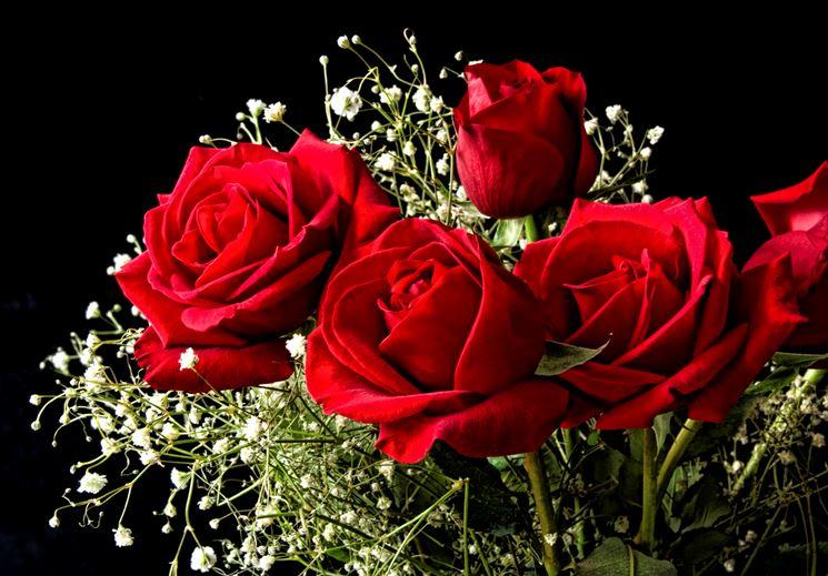 Alcune rose rosse