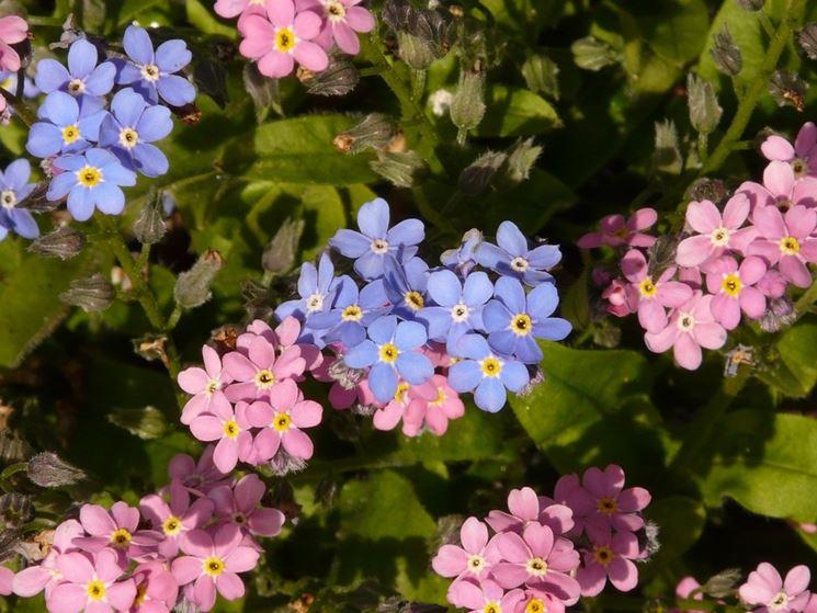 Straordinario fiore chiamato