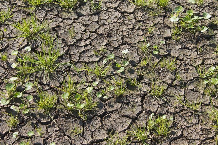 Terreno argilloso e cretoso