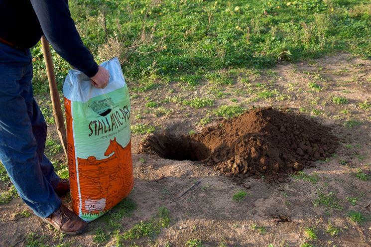 Concimazione piante da frutto giardinaggio concimare for Piante da frutto