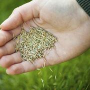 La semina del prato