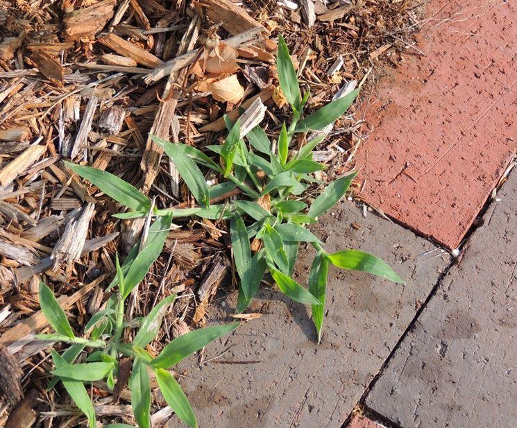 crescita di piante infestanti