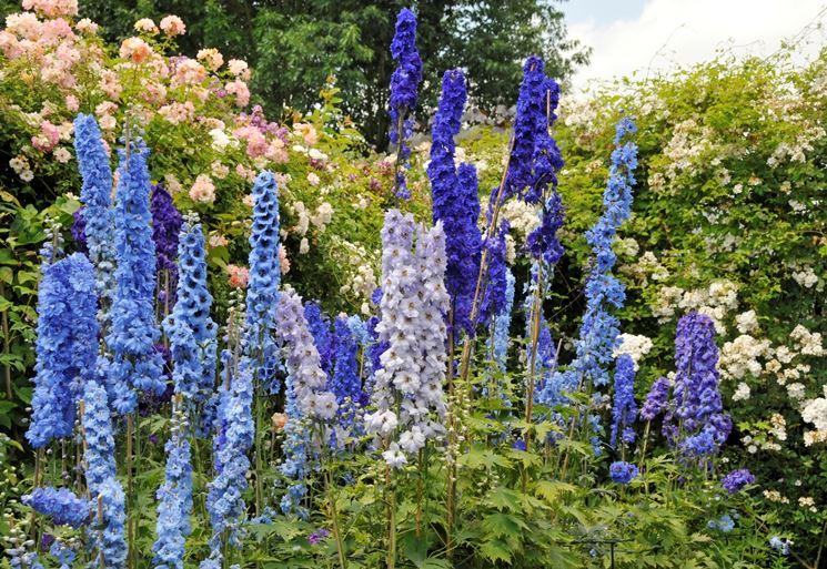 Fiori da giardino perenni giardinaggio coltivare fiori for Piantine fiorite perenni