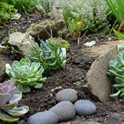 Angolo di giardino roccioso