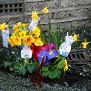 fiori guerrilla gardening