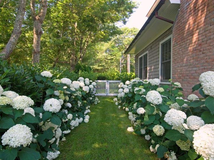Giardino vialetto fiorito