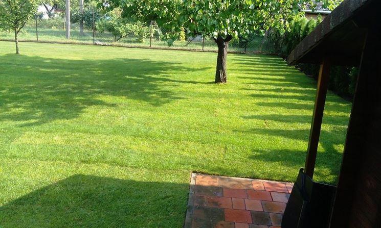 Prato giardino