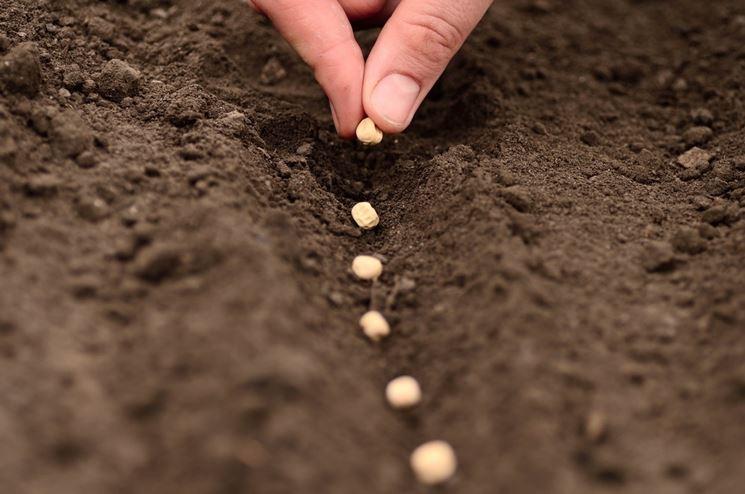 Semina su terreno lavorato