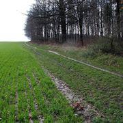 Il terreno argilloso trattiene l'acqua