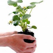 Trapianto pianta