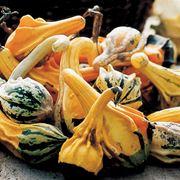 Vari tipi di zucca ornamentale