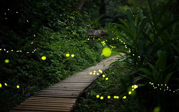 Luci da giardino lampade da giardino illuminazione - Luci per giardino ...
