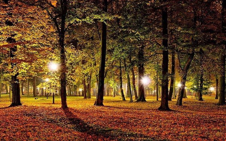 Luci da giardino agli alberi