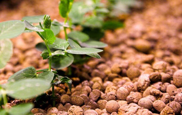 Argilla espansa e una pianta