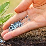 Somministrare i concimi alle piante