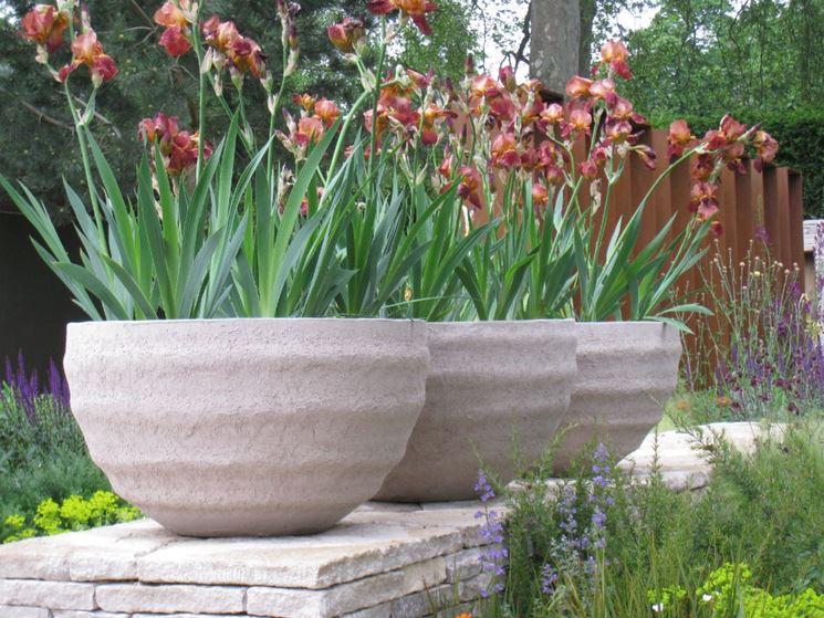 Esempio di piante in vaso