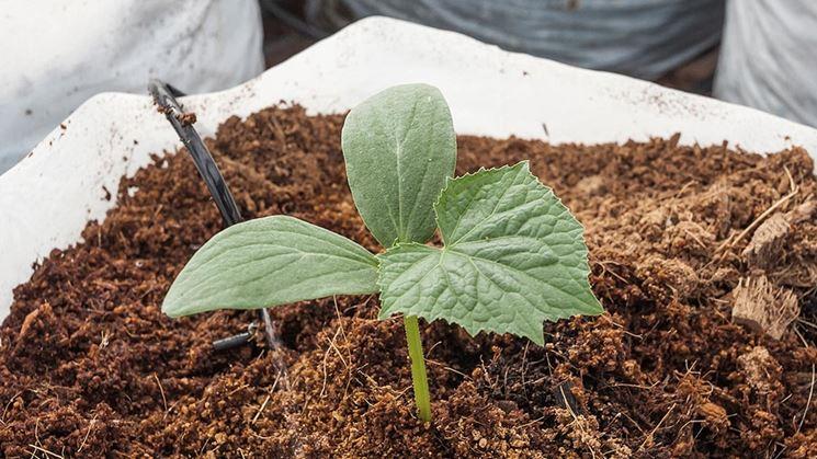 Coltivazione delle piante nella torba