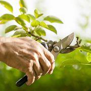 La potatura di un ramo secco