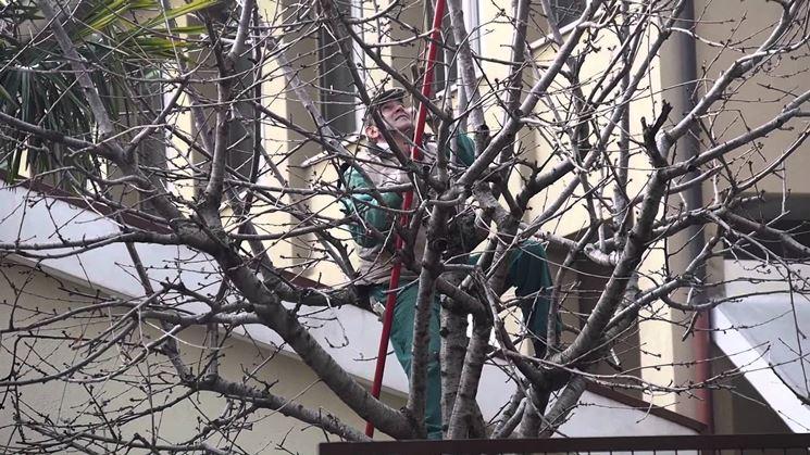 Eseguire la potatura del ciliegio