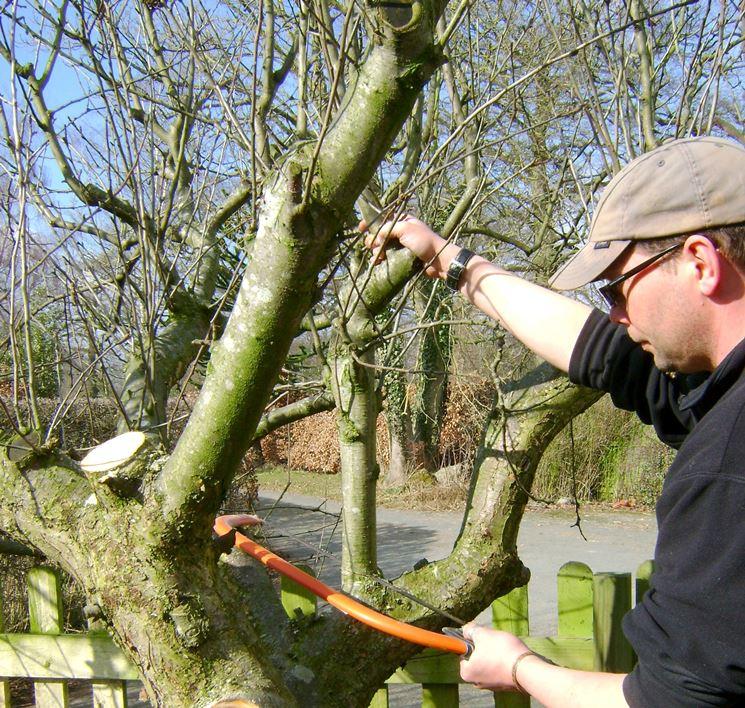 Potatura formazione albero frutto