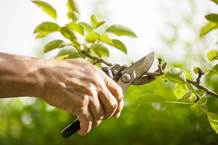 potare piante