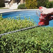 Potatura pianta giardino