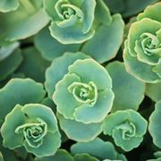 esempio di piante grasse