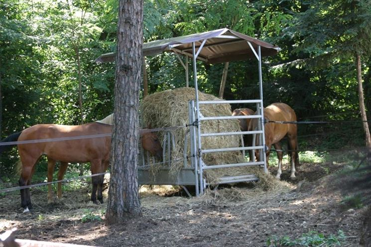 recinzione elettrica recinzioni casa utilizzare