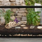 Piccolo terrario