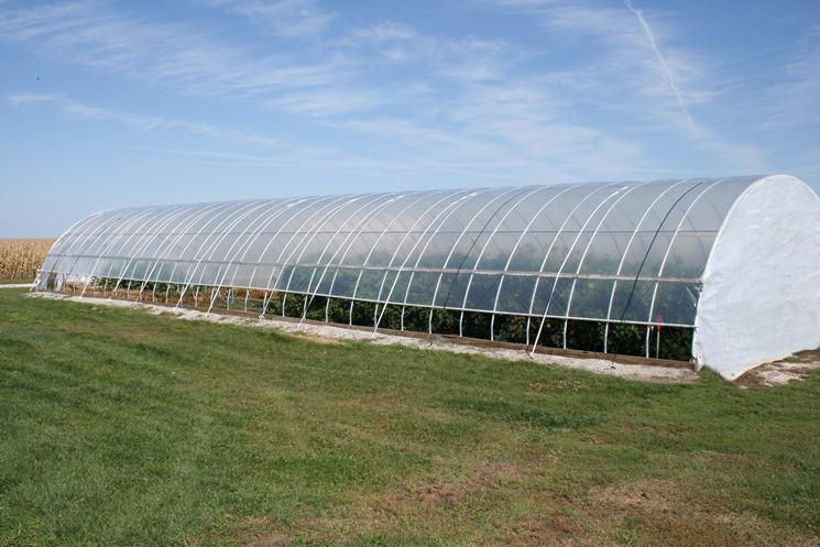 serra tunnel per grandi coltivazioni