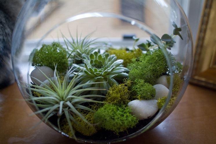 Terrario per piante grasse